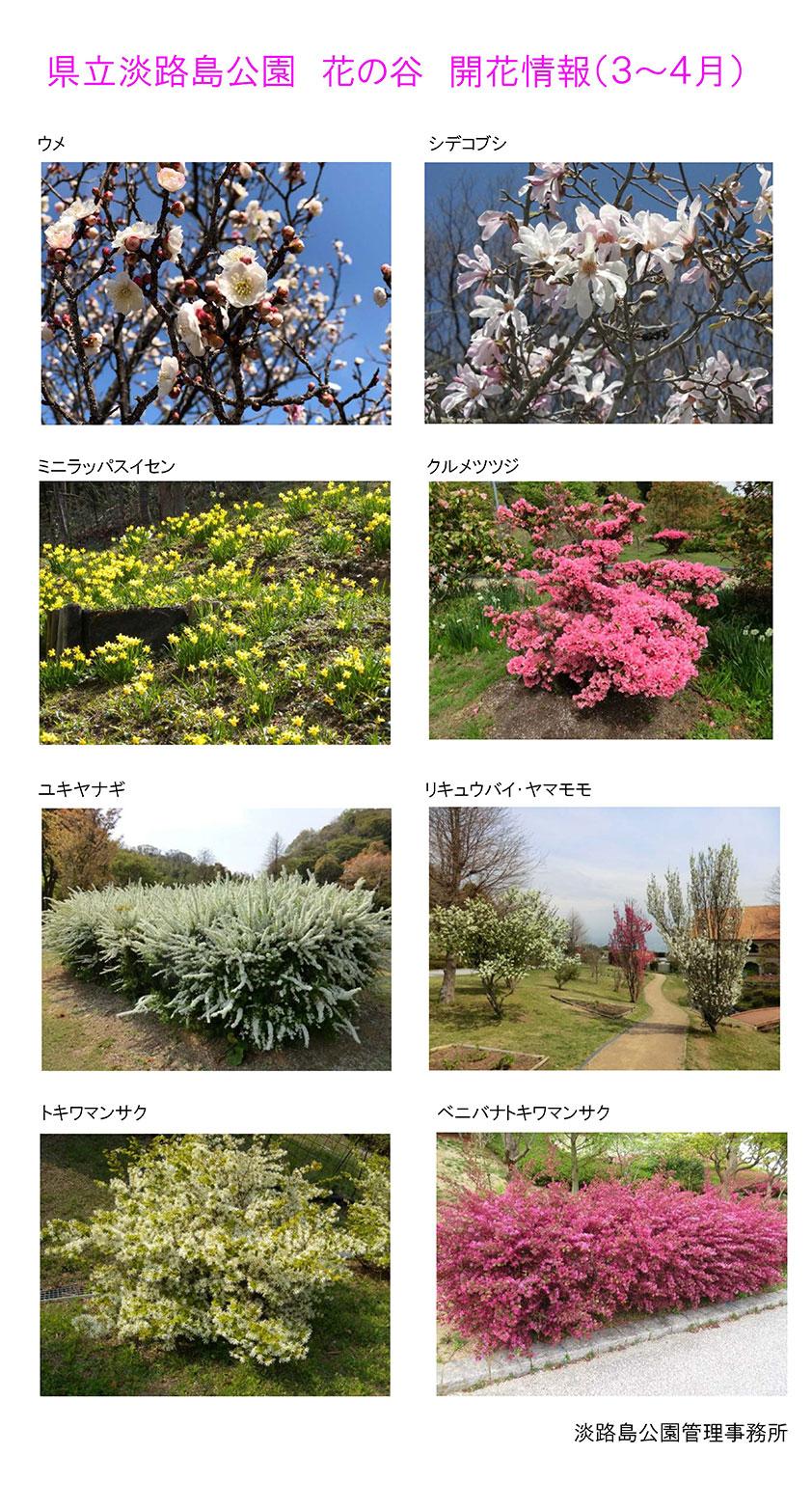 2021_3月~4月の開花情報【淡路島公園 花の谷】